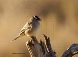 Sparrow Galleries