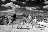 Benediction des chevaux