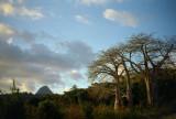 Baobabs et mont Choungi
