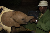 3289 - Shimba is our adopted elephant