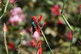 In the garden at Kiambethu