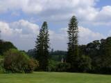 The gardens are beautiful here in Kiambethu