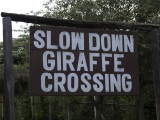 Just outside of Langata Giraffe Center - they mean this too!