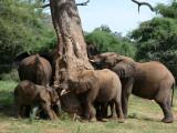 Day Three - Nairobi to Samburu Game Reserve
