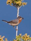 Birds of Lesvos 2007