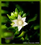 Fleur JBM-204346.jpg