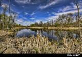 Marais, Pointe aux Prairies,  Marsh