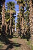 imperial valley date farm