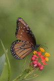 Insects and Butterflies