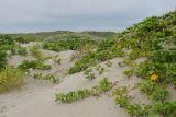 Padre Island NWR