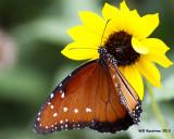 _MG_5482_butterfly.jpg