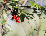 _MG_7110_berries.jpg