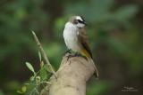 Urban birds with an EOS 7D (beta)