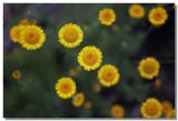 20100703 -- 114557 -- Canon 5D + Sigma 70 / 2.8 macro @ f/2.8, 1/400, ISO 100
