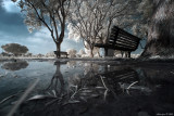 Infrared photography (Canon 20d/300d IR converted)