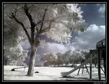 ir-garden.jpg