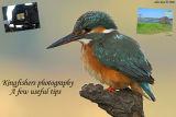 Kingfishers photography – a few useful tips