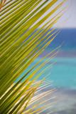 Ocho Rios Palm