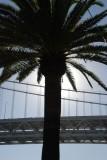 Bay Bridge Palm