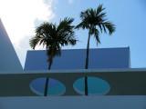 Miami South Beach Palm Trees