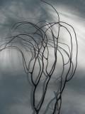 Seaweed Shadows