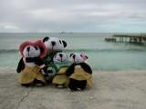 The Pandafords visit Grand Turk Island