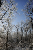 The Sun Dancing Through the Ice Covered Branches ...