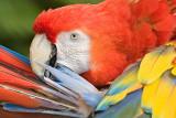 Parrot Beauty