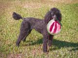 Josie with Frisbee