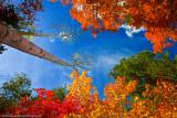 Endless Arizona Fall