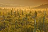Southwest Deserts