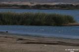 Buhairat_ul_Musk_Birds_009.jpg