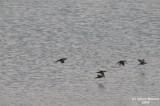 Buhairat_ul_Musk_Birds_011.jpg