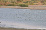 Buhairat_ul_Musk_Birds_012.jpg