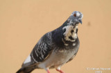 Bird_Jed_014.jpg