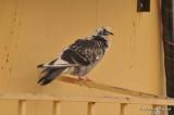 Bird_Jed_039.jpg