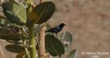 Bird_314.jpg