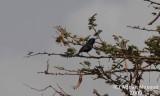 Bird_315.jpg