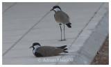 Bird_0211.jpg