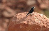 Bird_1101.jpg