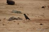 Bird 057 - May 08.JPG
