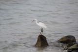 Bird 060 - Apr-May 08.JPG