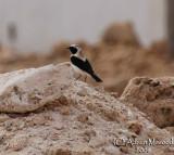 Bird 064 - Jed Apr 08.jpg