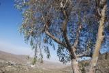 26 - Al-Shafa Valley - May 08.jpg
