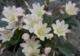 Washington Native Plants