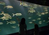 FISH PARADE AT THE ATLANTA AQUARIUM  -  ISO 400