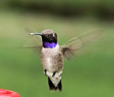 hummers_2009
