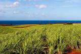 L48 Sky Sea Sugar (Kauai)