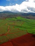 L59 Cane Fields (Kauai)