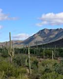 L8 Western Landscape (Tucson)